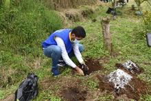 Siembra de árboles en Quinchía